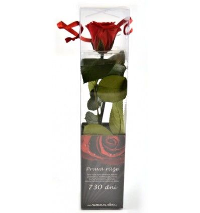 Dárková stabilizovaná růže MINI - červená